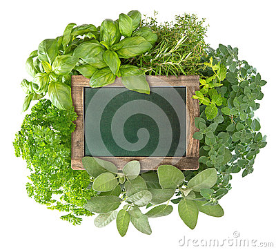 Blank green blackboard with variety fresh herbs Stock Photo