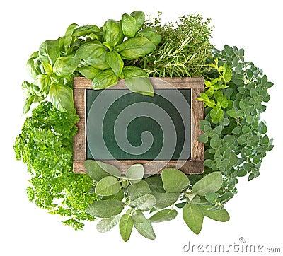 Blank green blackboard with variety fresh herbs