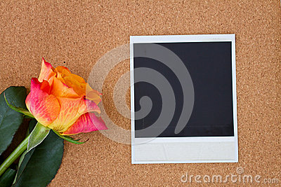 Instant photo with one rose