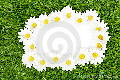 Blank paper framed with daisy petals
