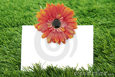 Blank paper with garbera on grass
