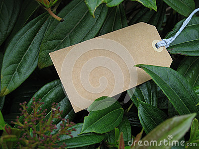 Blank paper tag in leaves