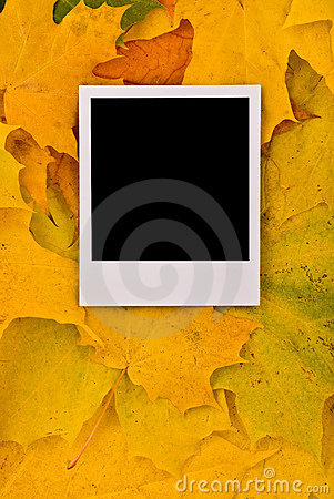 Blank photo card