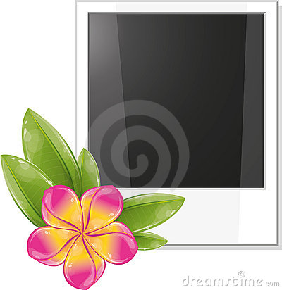 Blank photo frame with pink frangipani flower