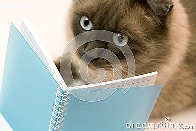 Blank rolig förvånad anteckningsbokavläsning för katten