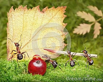 Blank, team of ants writing postcard, teamwork
