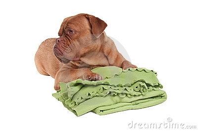 Blanket мое