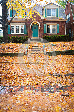 A Blanket of Leaves on the Lawn