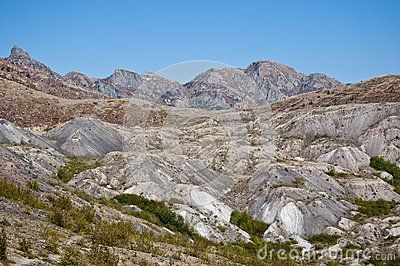 Blast zone of Mt. Saint Helens