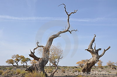 Blasted tree