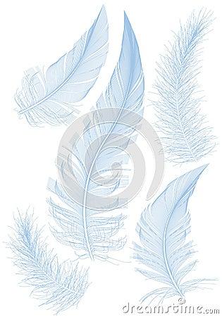 Blaue Feder