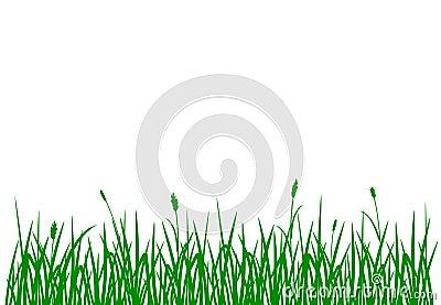 blaue fr hlingsblumen auf wei stock abbildung bild 70028934. Black Bedroom Furniture Sets. Home Design Ideas