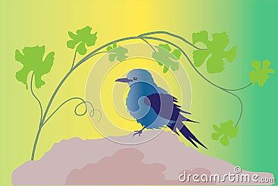 Blauer Vogel auf Felsen