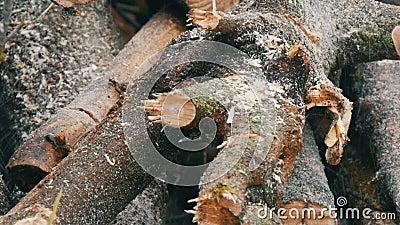 Blauwe de boomboomstammen van kettingzaagbesnoeiingen voor een brand stock video