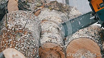 Blauwe de boomboomstammen van kettingzaagbesnoeiingen voor een brand stock footage
