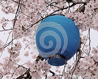 Blauwe lantaarn en bloemen