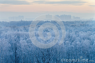 Blauwe zonsopgang in zeer het koude wintermorning