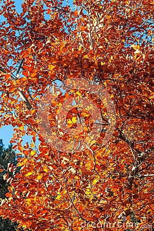 autumn uk