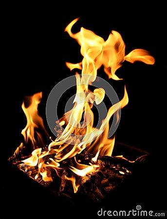 Free Blazing Campfire Stock Photography - 949202