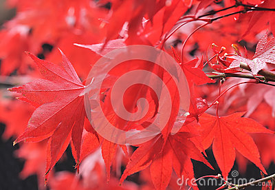Blazing foliage