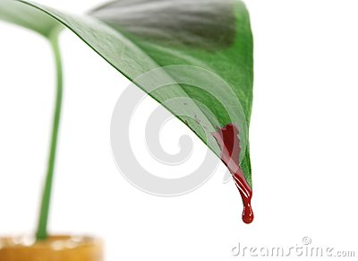 Bleeding leaf