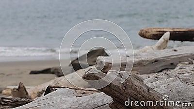 Bleek afwijkingshout op een stormachtig strand stock videobeelden
