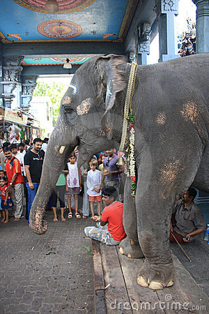 Blessing Elephant at Hindu Ganesha Temple India Editorial Stock Image