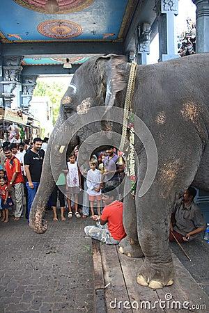 Blessing Elephant at Hindu Ganesha Temple India Editorial Stock Image