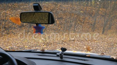 Blick vom Auto auf Bäume mit gelbem Laub außerhalb des Fensters im Wald Herbst Roadtrip oder Wochenendreise stock video footage