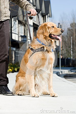 Free Blind Man And A Guide Dog Stock Photography - 62556952
