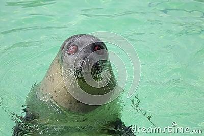 Blind Seal - 01