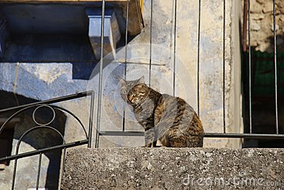 Blinded cat on the balustrade
