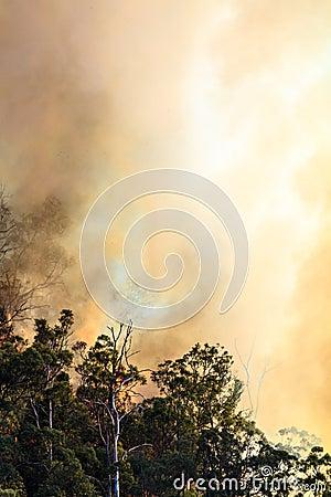Blinding Fire Smoke
