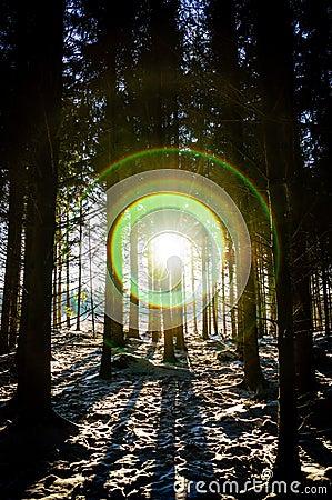 Blinding flare in dark forest