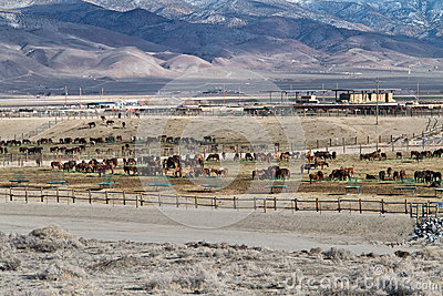 BLM Wild Horse Adoption Facility