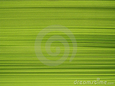 Block of green paper