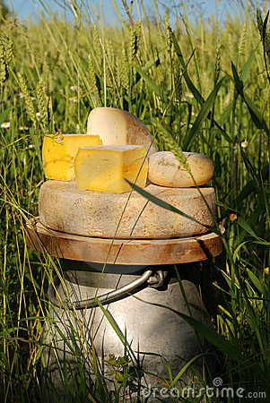 Free Blocks Of Cheese On Milk Urn Stock Images - 12605694