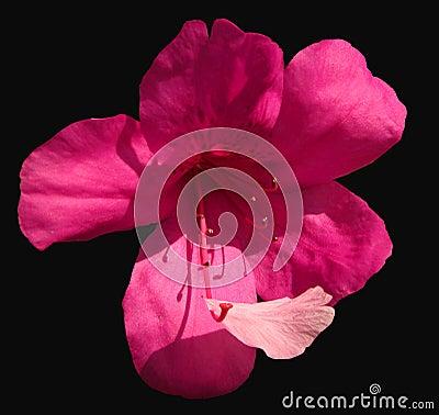 Bloem en bloemblaadje