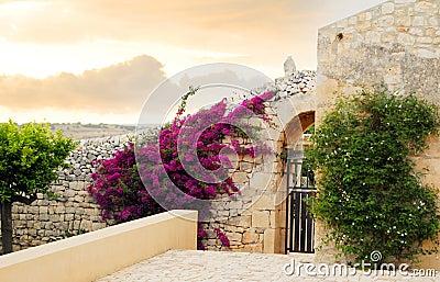 Bloemen op oud Siciliaans huis