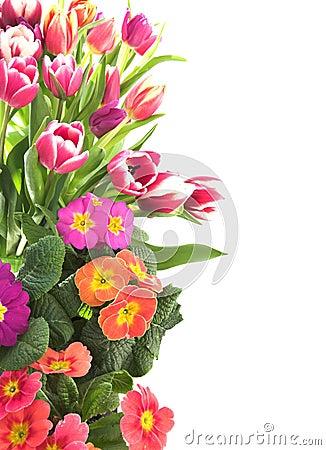 Bloemen tulp en sleutelbloemgrens