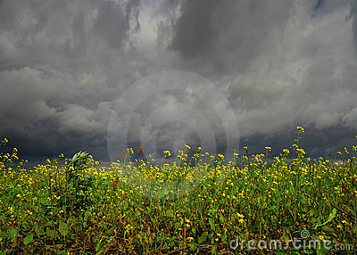 Bloemen vóór onweersbui