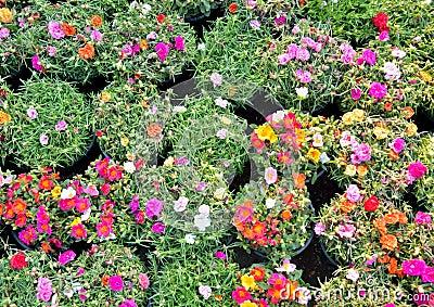 Bloemen voor het hangen van decoratie stock foto afbeelding 38742120 - Decoratie eenvoudig voor het leven ...