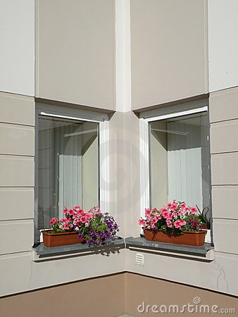 Blommar fönster