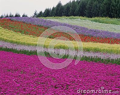Blommar wild