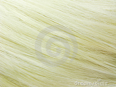 Blond hair as texture background