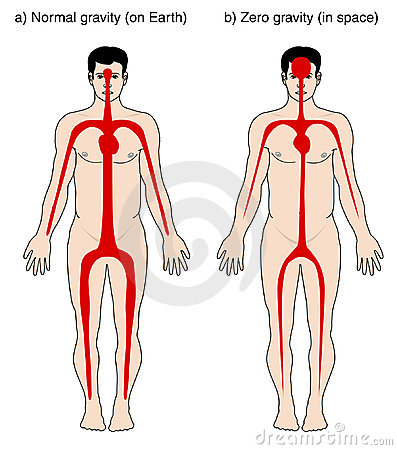 Blood distribution due to gravity