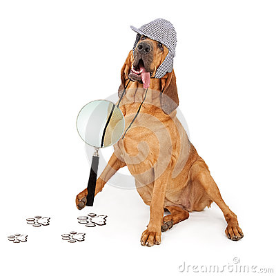 Free Bloodhound Dog Tongue Hanging Out Royalty Free Stock Image - 50108366