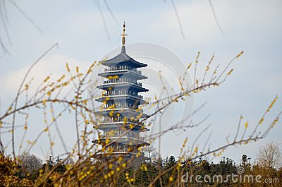 Bloom and pagodas