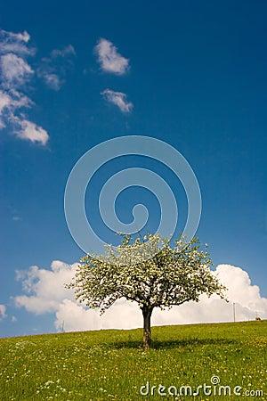 Bloom Tree