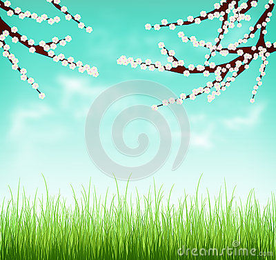 Blooming cherry branches on a green meadow. Spring background. Stock Photo